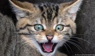 قطة تنقذ 3 فتيات من الموت!